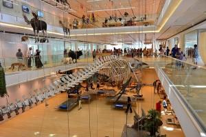 Museo_delle_Scienze_Trentino_Muse-piano-terra_b