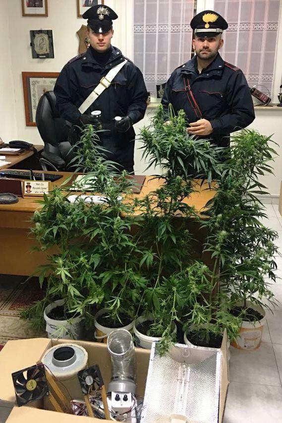 piante marijuana